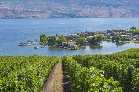 subdivision: Vineyard overlooking Green Bay subdivision Okanagan Lake Kelowna British Columbia Canada in the summer
