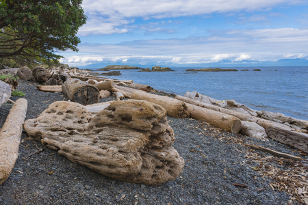 Driftwood on beach on Nanaimo Vancouver island British Columbia Canada in summer Stock Photo