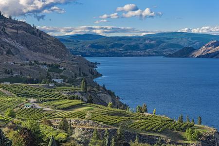 poblíž: Okanaganské jezero poblíž Summerland Britská Kolumbie Kanada se sadou a vinicemi v popředí