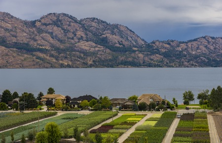 subdivision: Tree Nursery overlooking a subdivision Okanagan Lake Kelowna British Columbia Canada in the summer