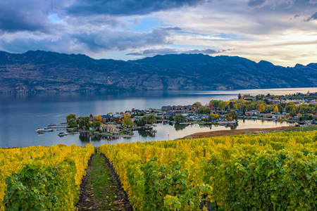 subdivision: Vineyard overlooking a subdivision Okanagan Lake Kelowna British Columbia Canada in the fall Stock Photo