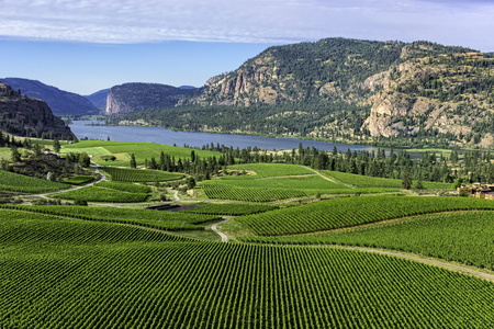 Wein Weinberge im Süden Okanagan in der Nähe von Pentiction British Columbia Kanada mit Vaseux Lake und Bergklippen im Hintergrund