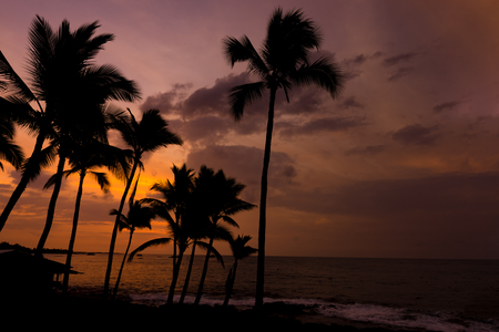 Kona sunset against palm trees on the Big Island Hawaii