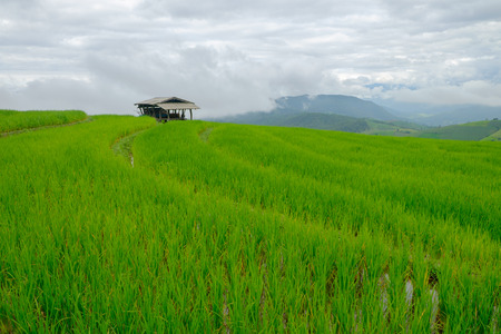 green fields: pa Pong Piang Rice Terraces, Thailand Stock Photo