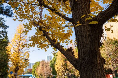 The trees along the streets of the city are changing color