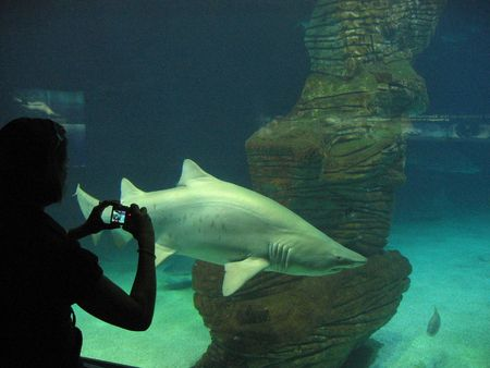 Shark in an aquarium photo