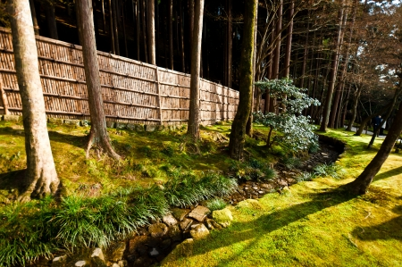 Japanese forest with bamboo fence photo