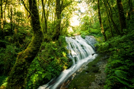 chiang mai: Waterfall in hill evergreen forest of Doi Inthanon, Chiang Mai, Thailand