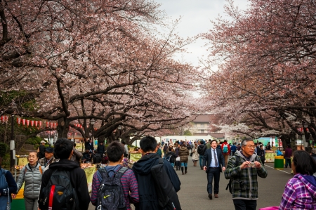 Tokyo, Japan - April 3, 2012 : Japanese people walking along the steet with cherry blossom (sakura) blooming in Ueno park. 新聞圖片