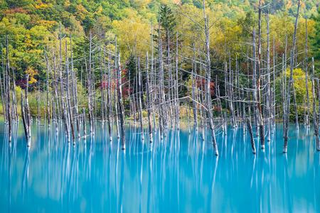 Blauwe vijver Aoiike in Biei, Hokkaido Stockfoto - 26803610
