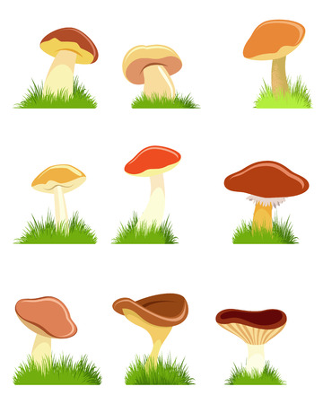 Vector illustration of a nine mushrooms set