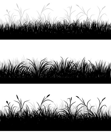 grass field: Vector illustration of a grass field silhouettes