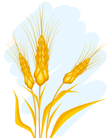 Vector illustration of a wheat ears on blue Ilustrace