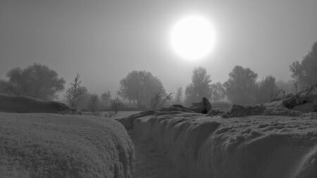 Black-white winter, fog and the huge Sun Banco de Imagens