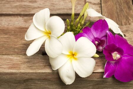 bloemen wit zwart: plumeria flowers white pink color wall nature background