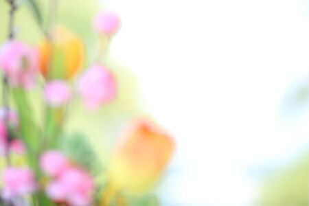 colorize: Floral background on soft pastel color Stock Photo