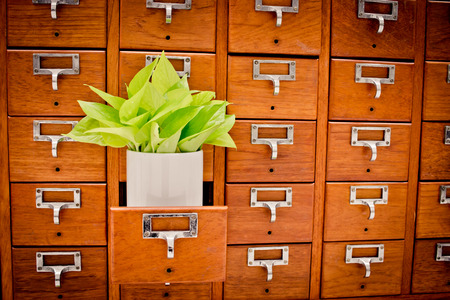 Tree on Open wooden cabinet boxes in Library or Filing archive reference card catalog. Knowledge base and education concept, Selective focus