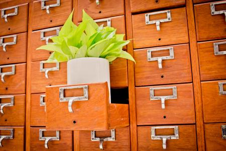 Boom op open houten kastdozen in bibliotheek of archief archiefreferentiekaart. Kennisbasis en educatieconcept; Selectieve focus; Boom op Open houten kastdozen in Bibliotheek of Archief archief r;