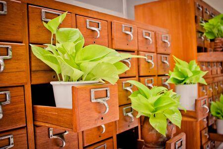Boom op open houten kastdozen in bibliotheek of archief archiefreferentiekaart. Kennisbasis en onderwijsconcept, Selectieve nadruk Stockfoto - 92850244