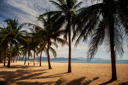 fleecy: panorama of beautiful palm trees on sand beach of resort city against fleecy clouds Stock Photo