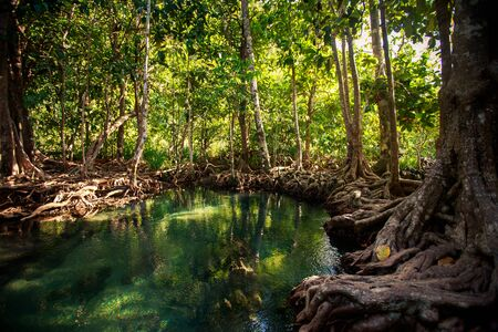 gleams: closeup gleams of river among green mangrove trees with interlaced roots under seldom sunlight in tropical tourist park