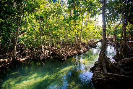 seldom: bright green and blue narrow river among mangrove trees with interlaced whimsically roots under sunlight