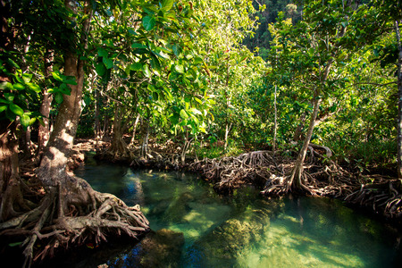 seldom: green mangrove trees with interlaced whimsically roots and river water under bright sunlight