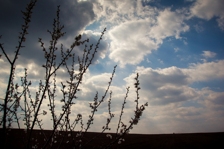 ploughed: blue sky with cumulus clouds above ploughed field and tree branch with leaf-buds on foreground Stock Photo