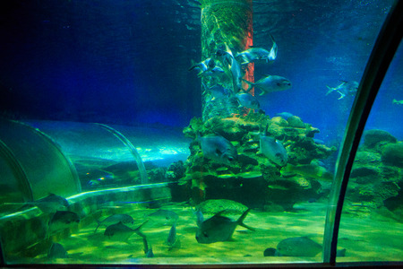 view of different fish in oceanarium under blue and green light from tourist tube Stock Photo