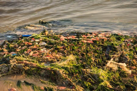 closeup of old fishing nets full of green seaweeds and shells on wet gray beach at sunset light