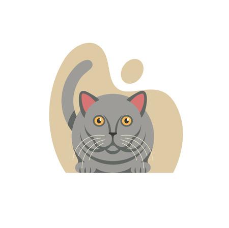 British cat on white background.