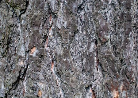 Pine tree bark, solid background. Banco de Imagens