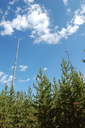 Yellowstone National park - New trees growing next to old trees