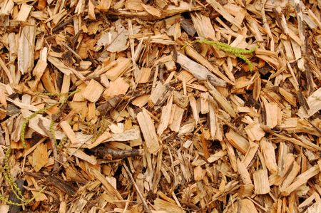 Close up of mulch with brown woodchips Stok Fotoğraf