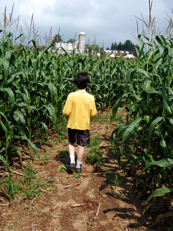 Boy inside corn maze, walking away from you