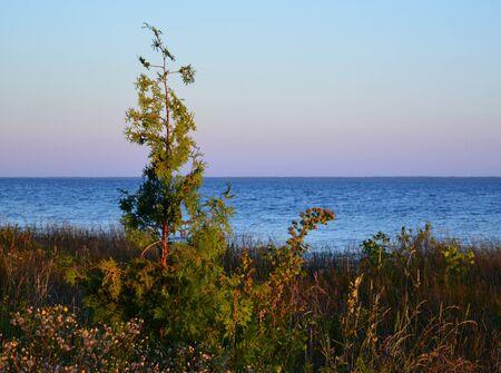 mackinac: Dusk on small pine tree near shore at Mackinac Island, Michigan