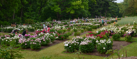 arbor: ANN ARBOR, MI - JUNE 9:  People enjoy the peony garden at the University of Michigan�s Arboretum in Ann Arbor on June 9, 2015.