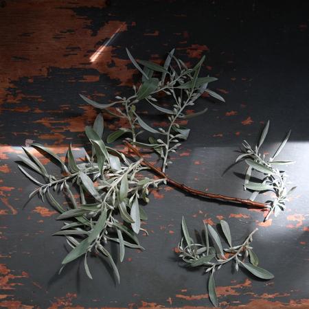 木製の背景の猫-柳の枝の花束。テキストのためのスペース。 写真素材