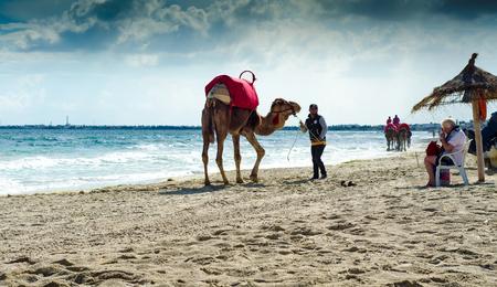 camels on the beach, Djerba, 07 Nov 2014