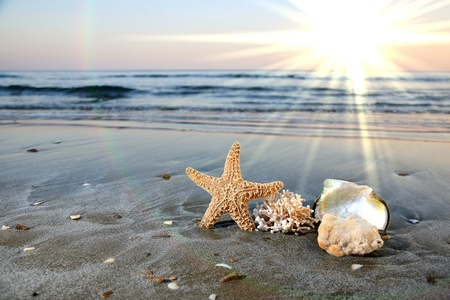conch shell: sea star nad corals on a beautiful beach