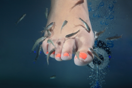 close-up of feet taking care at fish spa