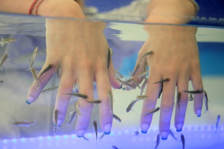 close-up of hands taking care at fish spa