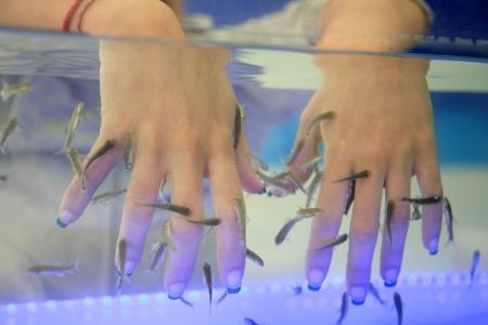 fish spa: close-up of hands taking care at fish spa