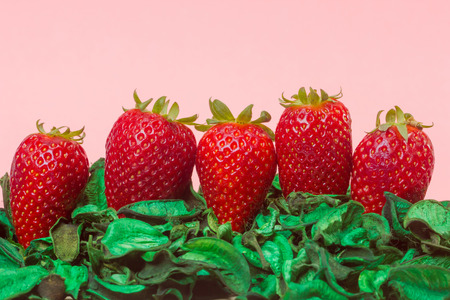 strawberies: closeup of fresh strawberries on a green dried leaf Stock Photo