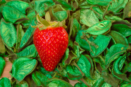 closeup of fresh strawberry on a green dried leaf photo