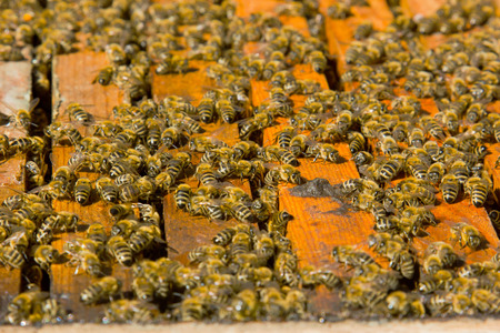 hives: Colorful hives and bees in the nature