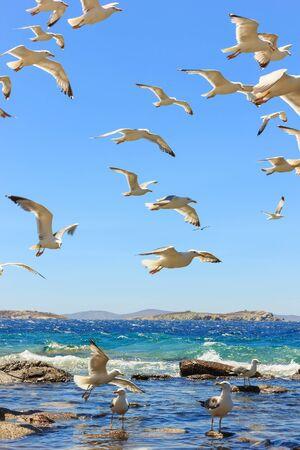 swarm: swarm of sea gulls flying close to the beach Stock Photo