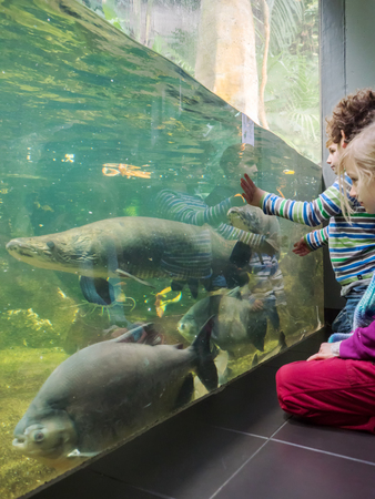 aquarium visit: BERLIN,GERMANY - JANUARY 4, 2016: Kids visit the aquarium at feeding time and watching big tropical fishes have lunch