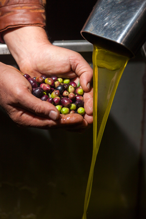 Hands with olives and olive oil pouring from a pipe