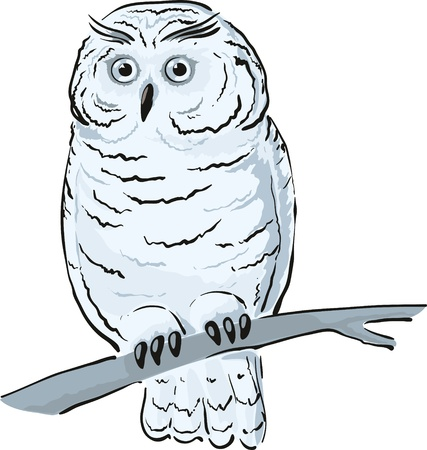 Single white owl sits on the branch